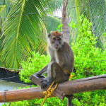 LAGUNDE BEACH RESORT_monkey